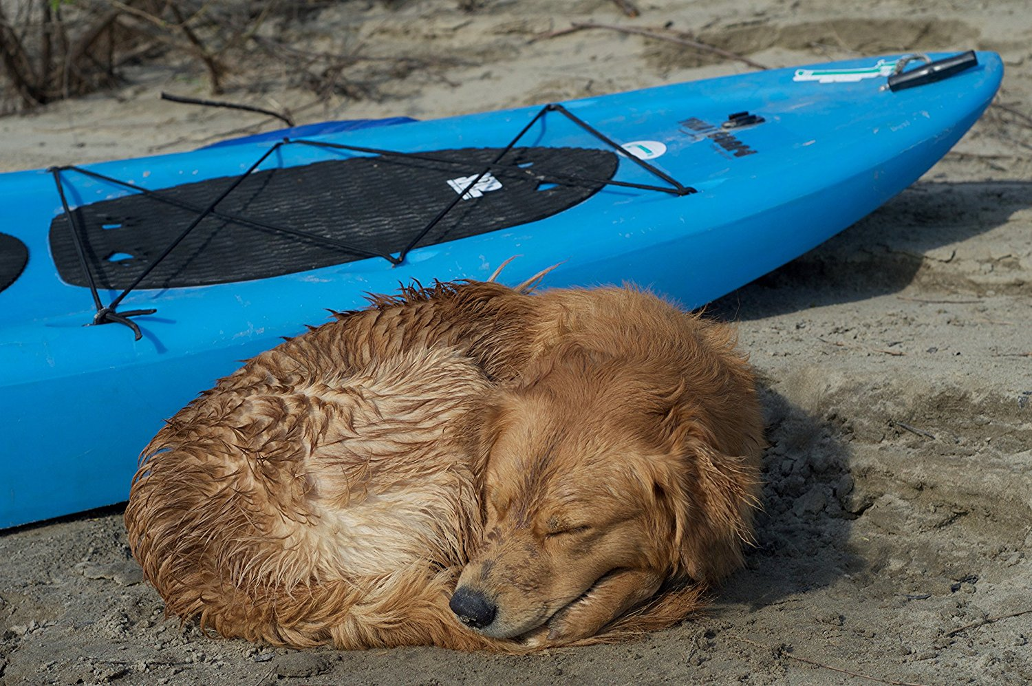 Paddleboard Dog Traction Pad Sup Now Paddleboard Accessories